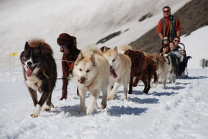 Camp Suisse Session 3 2016; Glacier 3000; Dog sledding