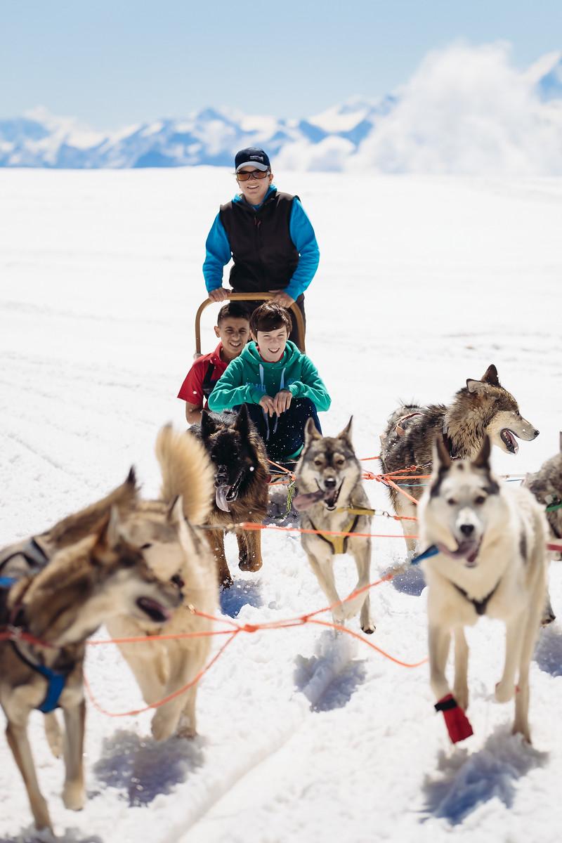 husky sledding on glacier